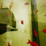 金魚が泳ぐ電話ボックス!? 金魚の街、大和郡山へ行ってきた