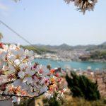 日本さくら名所100選!広島尾道にある 千光寺公園の桜を見に行こう